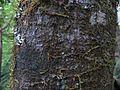 Plumwood 2.jpg
