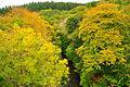 Plymbridge Woods north of Cann Viaduct (5945).jpg