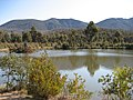 Pond at Tidbinbilla - panoramio.jpg