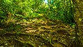 Praia do Camburi, Unidade de Conservação Núcleo Picinguaba - Imagem 02.jpg
