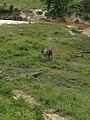 Pusat Latihan Gajah Riau 04.jpg