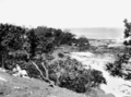 Queensland State Archives 1107 View of Caloundra looking North December 1930.png