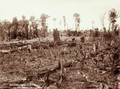 Queensland State Archives 2381 First step after clearing Planting Corn MalenyBlackall Range c 1899.png