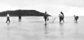 Queensland State Archives 940 Netting for Bait Goldsmith Island c 1931.png