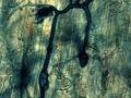 Réseau de mycorhize à l'intérieur d'une racine.tif