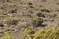 R381, Loxton to Beaufort West, South Africa 15.jpg