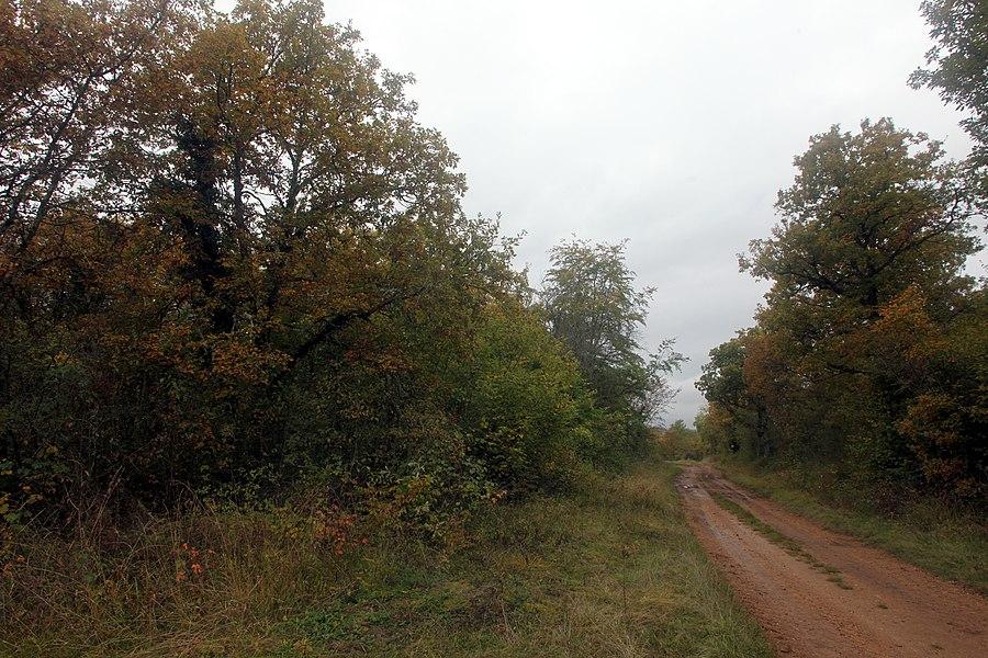 RNR des pelouses et bois de Villemoron (Haute-Marne).