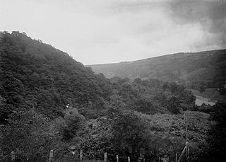 A view in Radnorshire