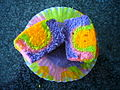 Rainbow cupcakes explored.jpg