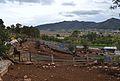 Ramaderia de bous a Xaló.JPG