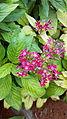 Rare flowers 02.jpg