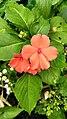 Red Flowers Found in Curug Nangka, Taman Nasional Gunung Halimun Salak, West Java.jpg