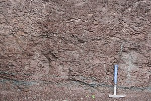 Mudrock - Red mudrock in the Ragged Reef Formation (Pennsylvanian), Cumberland Basin, Nova Scotia