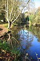 Reflections in the mill pond - geograph.org.uk - 1028748.jpg
