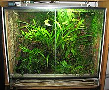 terrarium wikipedia. Black Bedroom Furniture Sets. Home Design Ideas