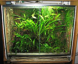 Terrarium - A temperature-controlled terrarium with plants inside