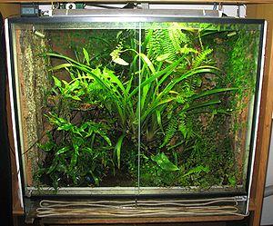 Exo Terra Glass Terrarium Xxcm