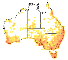 Map of Australia showing the range of Myrmecia sp.