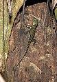 Reptilia (25061068175).jpg