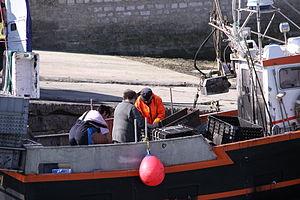 Retour de la pêche à la seiche du fileyeur Jason IV (9).JPG