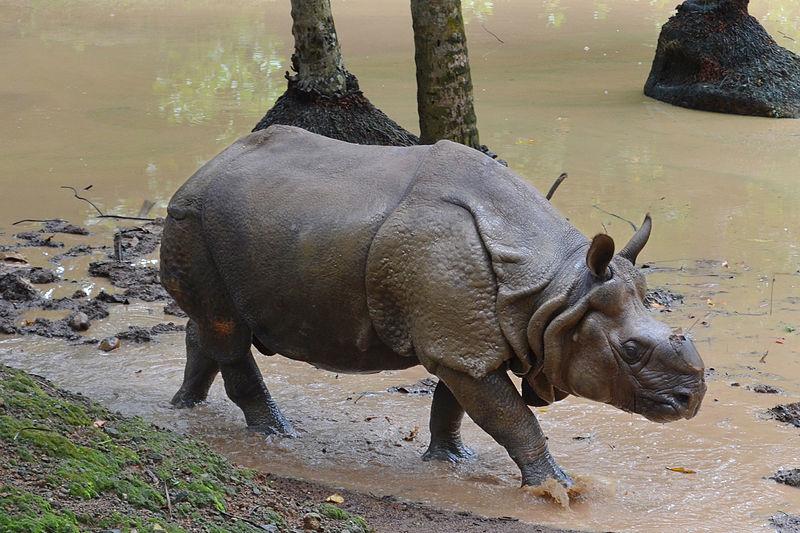 Rhino in Taiping Zoo