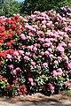 Rhododendronpark Bremen 20090513 117.JPG