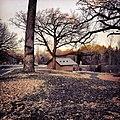 Rice Creek Dog Area - Shoreview, MN - panoramio (3).jpg