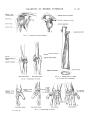 Richer - Anatomie artistique, 2 p. 29.png