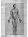 Richer - Anatomie artistique, 2 p. 81.png