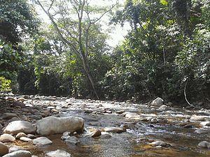 Cordillera Oriental montane forests - River in the Serranía del Perijá in the north of the ecoregion