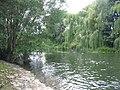 River Avon at Melksham - geograph.org.uk - 497024.jpg