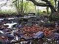 River Ogden in Autumn - geograph.org.uk - 1550639.jpg