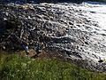 River Tosna 05.jpg