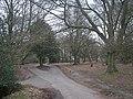 Road near Holly Hurst - geograph.org.uk - 1746620.jpg