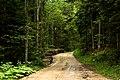 Road to the Banjska Stena viewpoint, Tara's national park, Serbi - panoramio.jpg