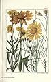 Rocky mountain flowers (Plate 41) (6280210380).jpg