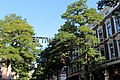Rotterdam - Witte de Withstraat.jpg