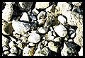 Rough stones (2579040462).jpg