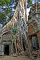 Ruins of Ta Prohm, Cambodia.jpg