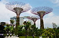 SG-gardens-bay-supertree-grove.jpg