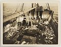 SLNSW 9246 Series 14 Fish on trawler off Gabo 1923.jpg