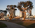 San Diego marina (00107).jpg