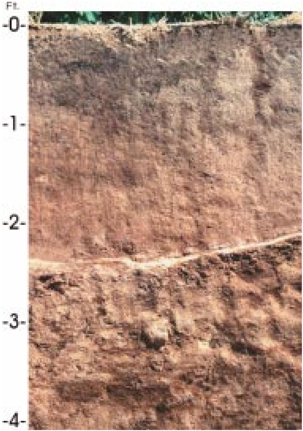 San Joaquin soil profile