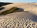 Sand Dunes in the Sutherland Shire, Sydney 3.jpg