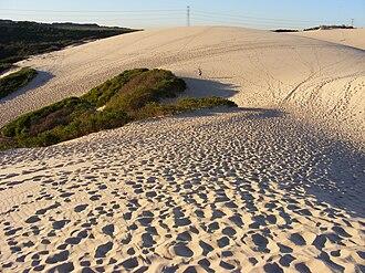 Cronulla sand dunes - Image: Sand Dunes in the Sutherland Shire, Sydney 3