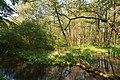 Schleswig-Holstein, Nordhastedt, Landschaftsschutzgebiet Mühlenteich NIK 2485.jpg
