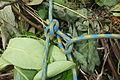 SchmetterlingsknotenSpanner.JPG