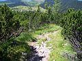 Schneeberg-sortpinewood.jpg