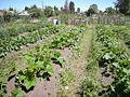 Seattle - Marra Farm 09.jpg