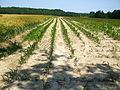 Secheresse en Haute Marne France.jpg
